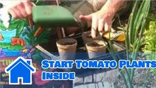 Growing Tomatoes : How to Start Tomato Plants Inside