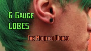 6 Gauge Lobes- THE MODIFIED WORLD