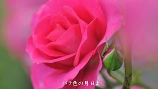 恋のバカンス ザ・ピーナッツ/song by 歌を描く午後(樹根)