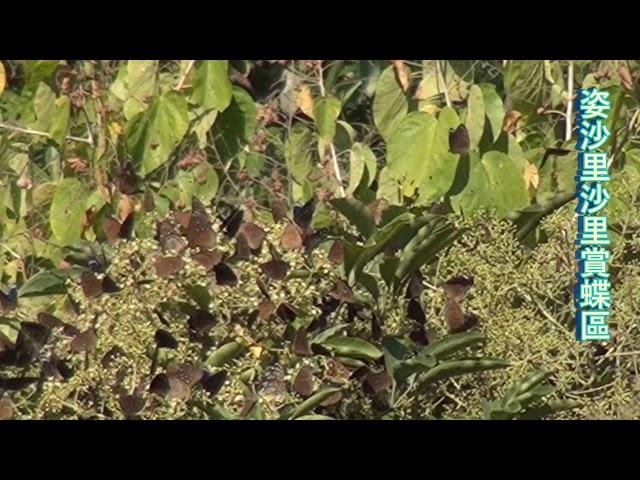 <html> <body> Film for Purple Butterfly2020-1-20 </body> </html>