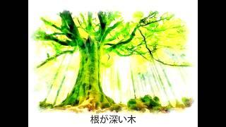 [根が深い木]#幸せの手紙