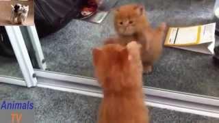 Сборник №4 смешных приколов с котами и животными. Очень веселые видео 2015 года