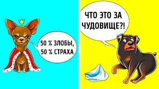 Что Ваша Собака Могла бы вам Сказать, Если бы Умела Говорить