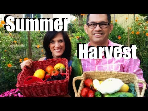 Organic Garden Summer Harvest - Let's Get Dinner!
