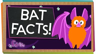 3 Fun Facts About Bats!