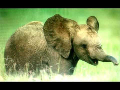 Música African Ivory