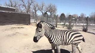 New Zebra At Riverside Discovery Center
