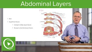 Layers of the Abdominal Wall – Anatomy | Lecturio