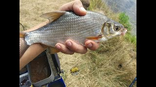 Рыбалка фидерной снастью на каналах украины