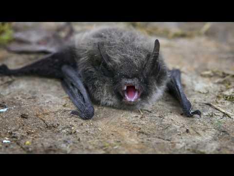 Tech Talk: All About Bats