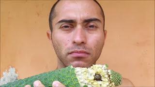 Frutas exoticas Monstera deliciosa planta y fruto 🏡