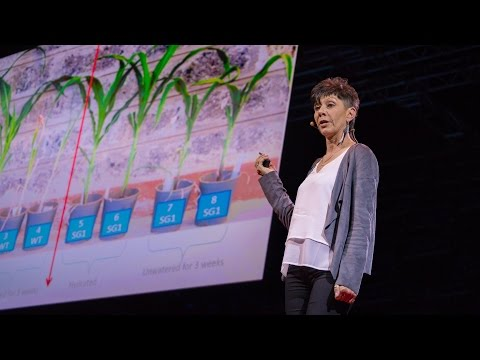 , title : 'How we can make crops survive without water | Jill Farrant