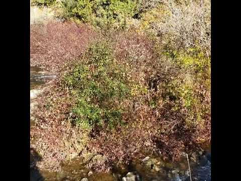 Fall Foliage, Rockwood Conservation Area, Ontario