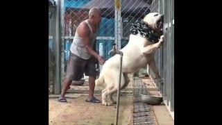 world biggest dog