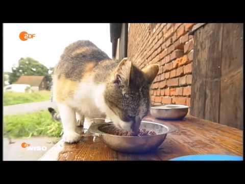 Fressnapf -  Warnung vor Katzenfutterproben