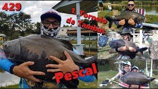 Torneio de Tambas  no Pescal - Fishingtur na TV 429
