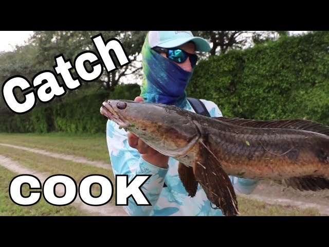 SnakeHead CATCH & COOK