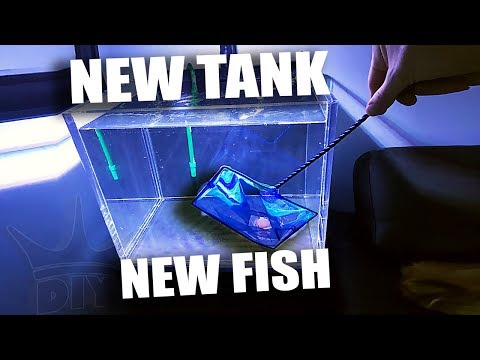 NEW TANK FOR THE NEW FISH!!