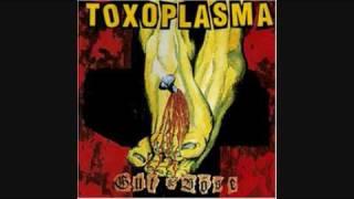 Toxoplasma - Schreibtischtäter