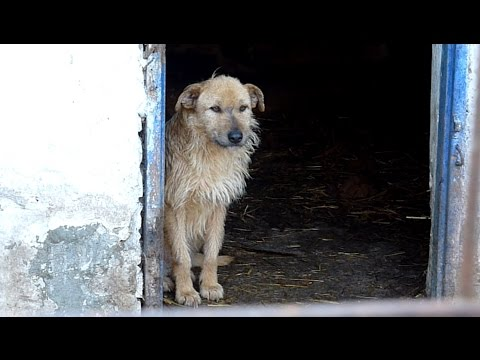 Rescue Of A Sad Dog Who Forgot To Live