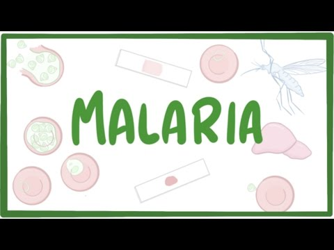Video Malaria - causes, symptoms, diagnosis, treatment, pathology