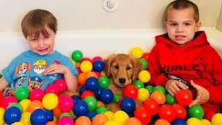 Golden Retriever PUPPY Plays In Ball Pit! Water Fun