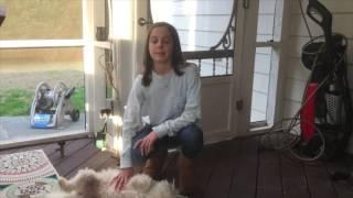 Alpha Teen: How to teach your dog you're the Alpha