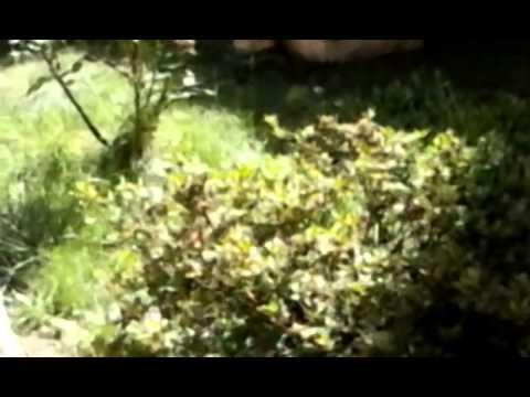 LG L40: Test registrazione video