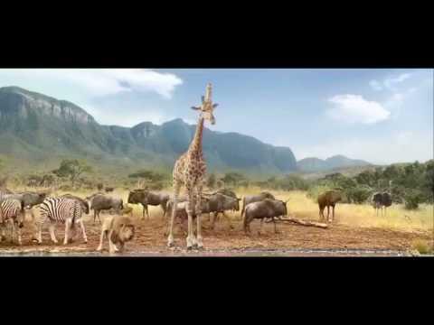 Voix animaux