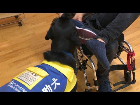 見かけたら優しく見守って 岡山市の小学校で介助犬への理解を深めるイベント