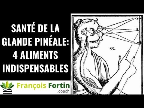 Glande pinéale: 4 aliments essentiels pour sa vitalité
