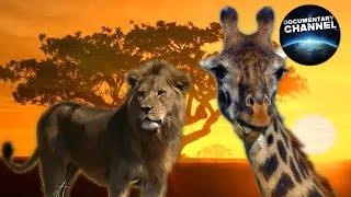 WILDLIFE IN SERENGETI | Wild animals | Serengeti National Park