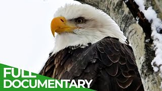 Eagles: The Kings of the Sky | Free Documentary Nature