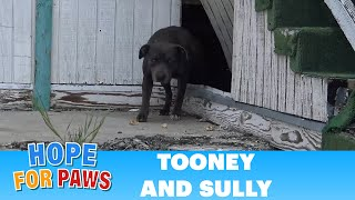 Download Youtube: Hope For Paws: This pregnant Pit Bull was not alone under this abandoned school!!
