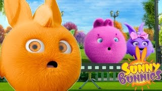 Cartoons for Children   Sunny Bunnies SUNNY BUNNIES THE TELEVISION   Funny Cartoons For Children