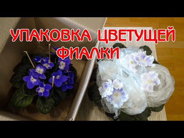 Упаковка цветущей фиалки