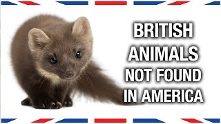 British Animals You Won't Find in America - Anglophenia Ep 27