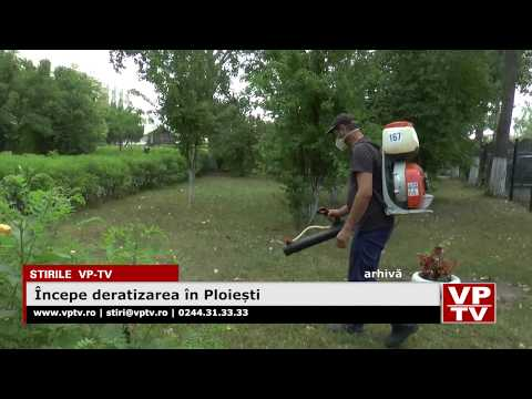 Începe deratizarea în Ploiești