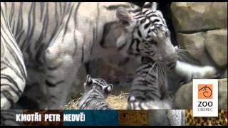 Petr Nedvěd bude u křtu malých tygrů