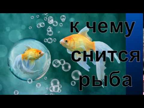 Сонник от Ирины.К чему снится рыба