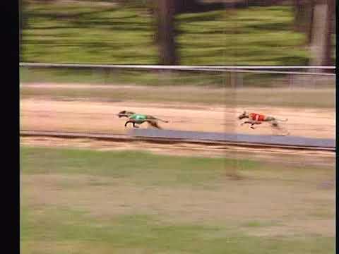 Race 56