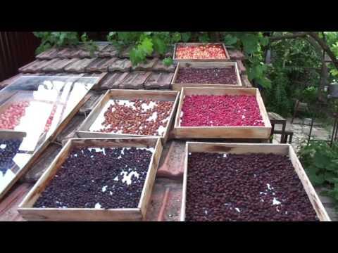 Солнечная сушка вишни, малины, смородины, черешни