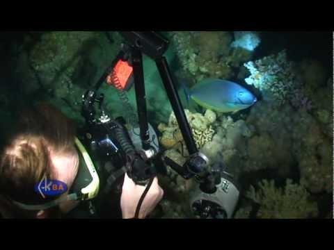 Red Sea night dive.