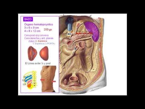 Previsión de la presión arterial