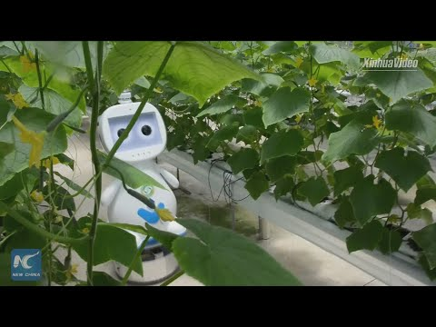 AI-powered, 5G-enabled robot put into use in E. China's greenhouse