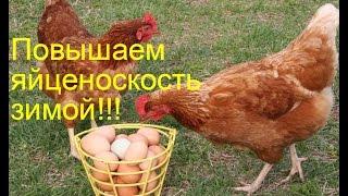 Как повысить яйценоскость у кур зимой. 3 способа.Chickens.