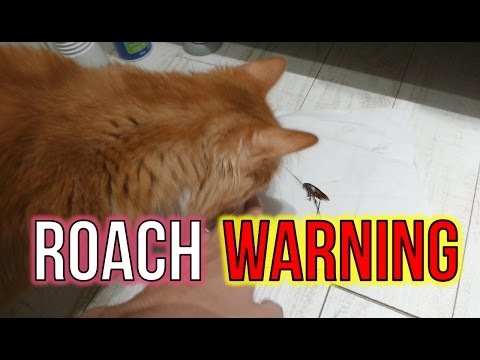 Japanese Cockroach FREEZING SPRAY