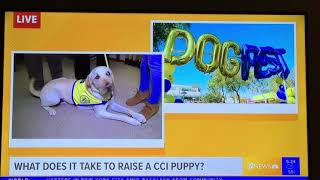 Change A Life at DogFest Phoenix - LIVE on KPNX-TV 12 News