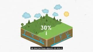 Qual é a nossa responsabilidade na preservação dos aquíferos?