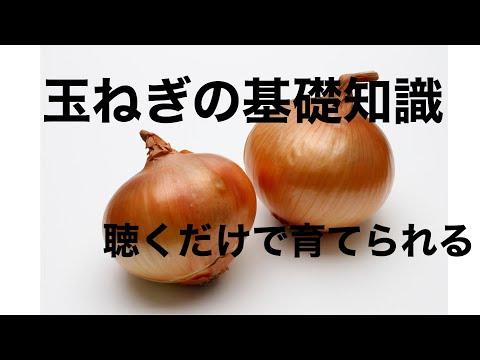 , title : '【家庭菜園】聴くだけでわかる玉ねぎの基礎知識